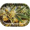 CBD Blüten BIOKONOPIA Black Kush 3.5g